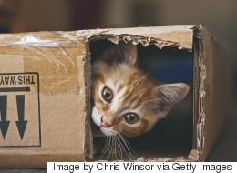 Les chats, aussi populaires sur le web que dans nos foyers