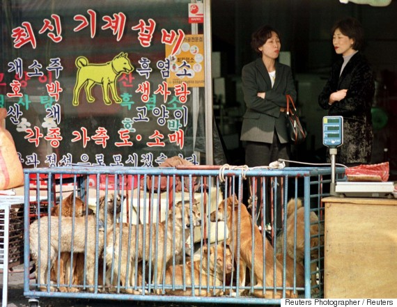 dog market korea