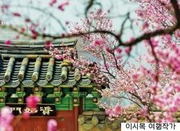 이른 봄 갈 수 있는 서울 고궁 산책길