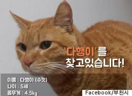 고양이 역장은 한 달 넘게 실종된 상태다