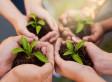 Vert et pas cher : des façons abordables d'être écologique