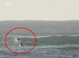 Un dauphin percute violemment ce surfeur (qui n'a pas l'air traumatisé...)