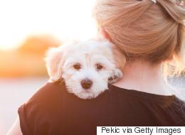 Saviez-vous que les chiens sont de bons manipulateurs?