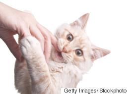 고양이 향이 나는 향수가 출시됐다(사진)