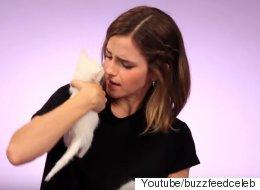 엠마 왓슨이 고양이 떼의 습격을 받다(동영상)