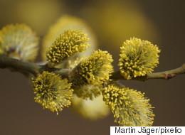 Was Pollenallergikern jetzt hilft
