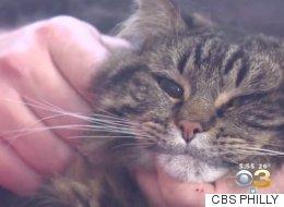 한 가족을 일산화탄소 중독에서 구해낸 고양이 영웅