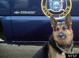 Wheeler Rescued Police Dog