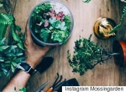 12 comptes Instagram à suivre si vous avez le pouce vert