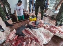 فضيحة اللحوم الفاسدة تهدد أسواق البرازيل.. مصر تستورد 20% من احتياجاتها من برازيليا.. وهكذا عقّبت السعودية والإمارات