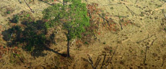 BRASIL FOREST DEFORESTATION
