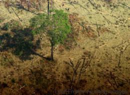 Wie ein Brasilianer seit 40 Jahren Baum für Baum den Regenwald rettet
