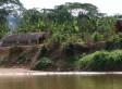 Amazonas-Ureinwohner haben gesunde Herzen - was wir von ihnen lernen können