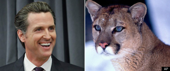 Gavin Newsom Lion