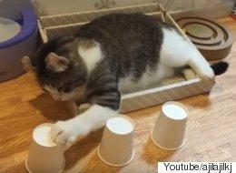 이 시크한 고양이는 야바위 천재다(동영상)
