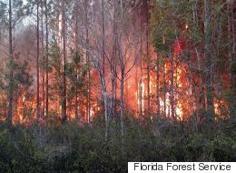 Florida Book Burning Ignites Wildfire, Destroys Homes