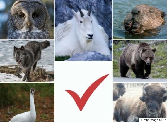 calgary zoo vote