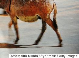 당나귀 3마리가 강남 가로수길 나들이에 나섰다 붙잡혔다