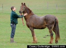 Shayne, 51, World's Oldest Horse? (PHOTO)