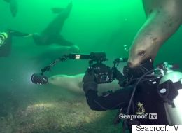Frolicking With Sea Lions Is Part Of The Job For This B.C. Filmmaker