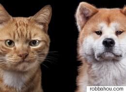 동물들에게도 저마다의 개성과 표정이 있다(화보)