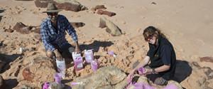 SAUROPOD TRACKS AUSTRALIA