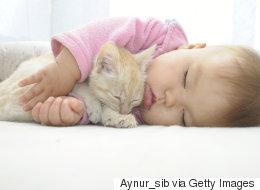 동물은 같이 낮잠을 자기에 가장 좋은 친구다(화보)