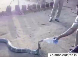 코브라가 야생동물 구조대에 도움을 청하다