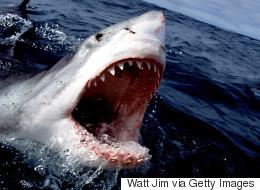 Βίντεο: Μεγάλος λευκός καρχαρίας «υποδέχεται» τους τουρίστες με ένα κοφτερό χαμόγελο