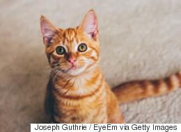 Plus de 200 000 personnes ont déjà vu la vidéo de ces chats à la fois mignons et angoissants