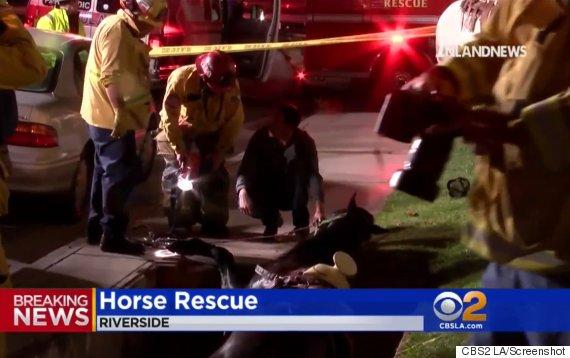 horse falls into hole