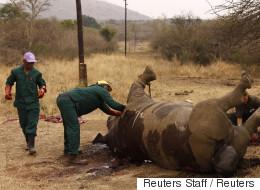 남아공 '코뿔소 뿔 농장'이 다시 문을 열었다