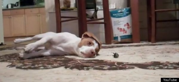 Toys r us Dogs Dog Loves Toy Mouse Until