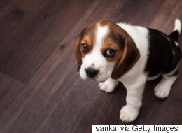 Au secours d'une nouvelle maman chien