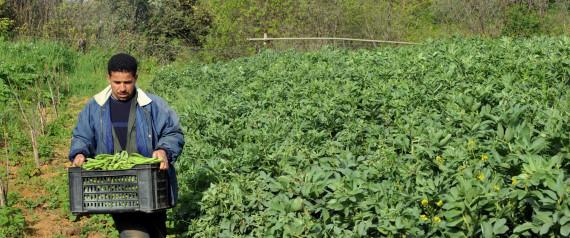 FARMER ALGERIA