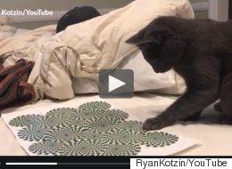 Ce chat devient complètement fou devant une illusion d'optique