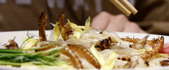PASTA WITH INSECTS JAPAN