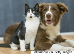 Vous rêvez de manger du chien ou du chat? Taïwan n'est plus la bonne destination