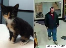 Sick Kitten Stolen From Alberta Pet Store
