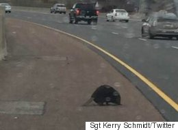 Ontario Highway Shut Down By Beaver Who Thinks It Owns The Dam Place