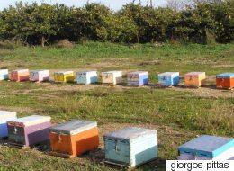 Ελλάδα: Η χώρα με τους περίπου 15.000  μελισσοκόμους