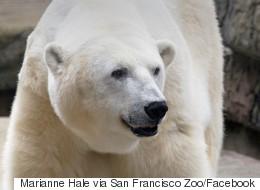 Oldest Polar Bear In U.S. Dies At 36