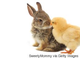 La saison des lapins de Pâques abandonnés est ouverte