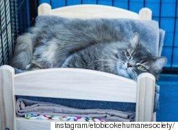 이케아가 고양이 보호소를 위해 인형침대를 기부했다