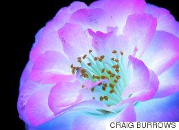 꽃을 자외선에 비치면 이런 놀라운 모습이 된다 (사진)