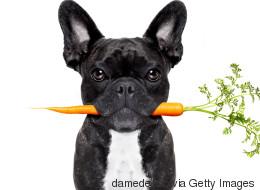 Darf man Barf? Über Veganismus bei Hunden