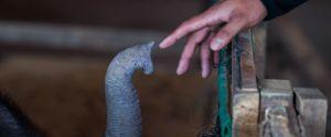 TOURIST ELEPHANT