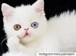 이 몽환적인 고양이는 이미 인스타 스타가 됐다