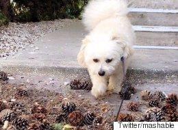 솔방울 사랑하는 강아지에게서 반전 모습을 찾다
