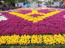 إسطنبول تتزين بأكبر سجادة في العالم من أزهار التوليب.. حجمها على تاريخ فتح القسطنطينية (صور)